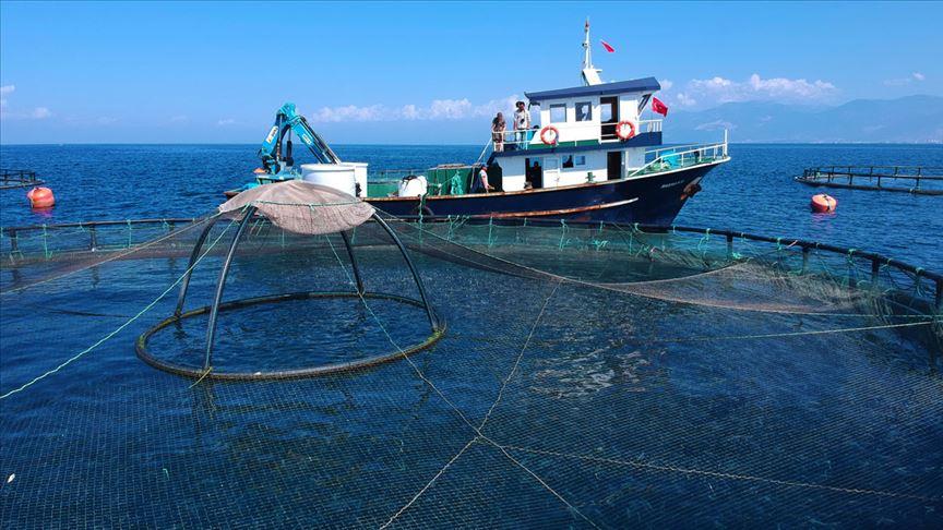 Çin'e su ürünleri ihracatının kapıları açıldı!