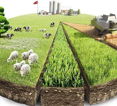 https://ekonomigercekleri.com/wp-content/uploads/2020/12/türkiye-tarım-GSYİH-400x360.jpg